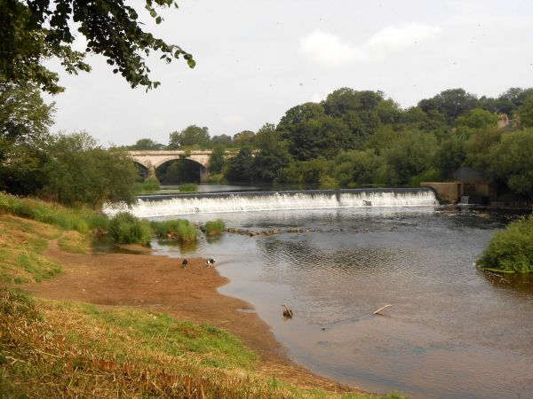 River Wharfe and Weir near Tadcaster