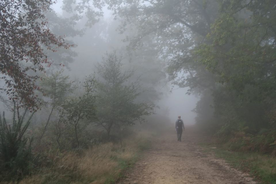 Mist on Surrey hills