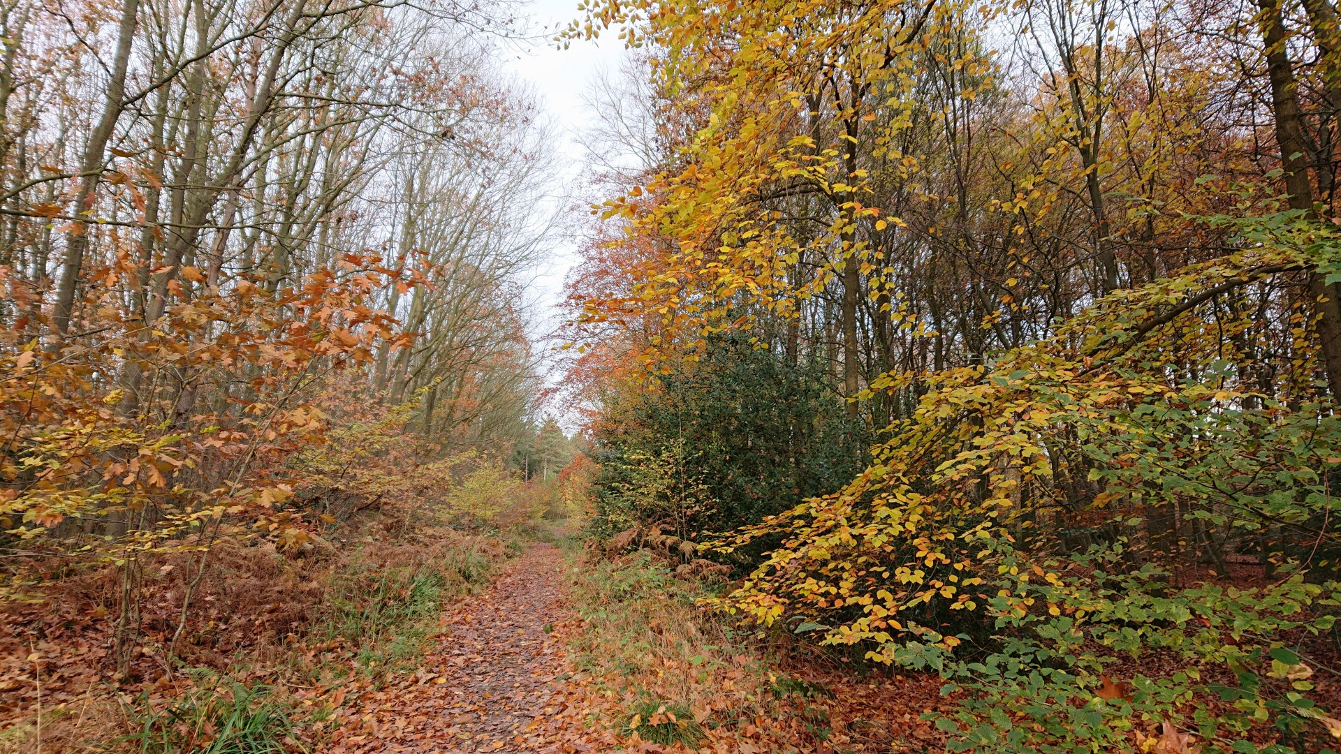 leafy track in autumn