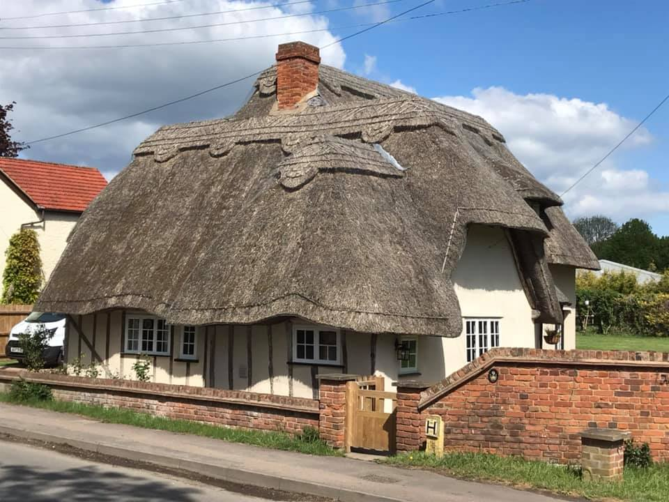 thatch of the day