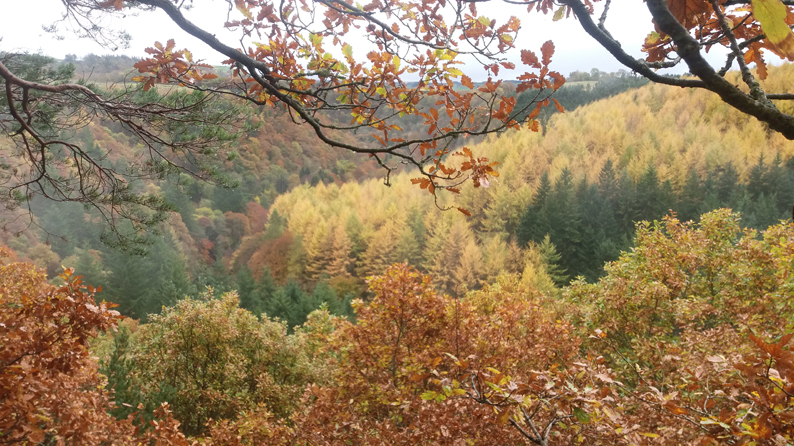 AUTUMN COLOURS AT STAWARD GORGE