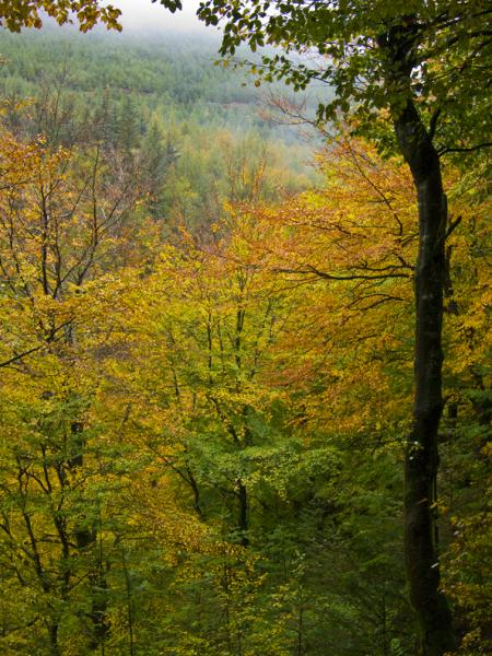 AUTUMN COLOURS IN DODD WOOD