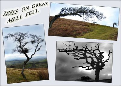 09. TREES ON GREAT MELL FELL