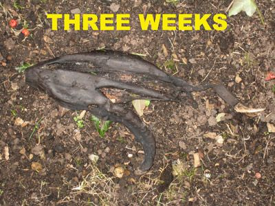 02. THREE WEEKS