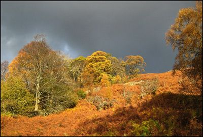 AUTUMN ABOVE AIRA FORCE