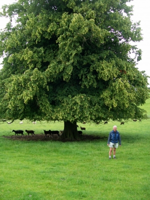 Phil with a lime tree