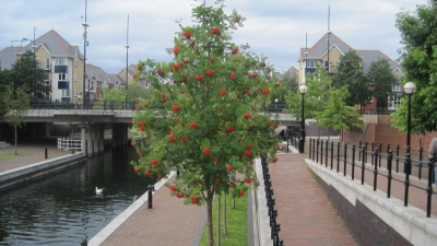 Salford in bloom