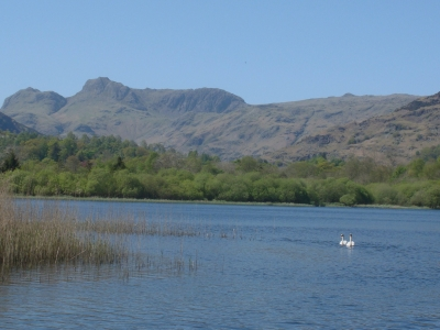 Two swans and the Langdale Pikes