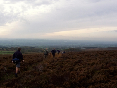 Into the Heather